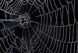 web with holes